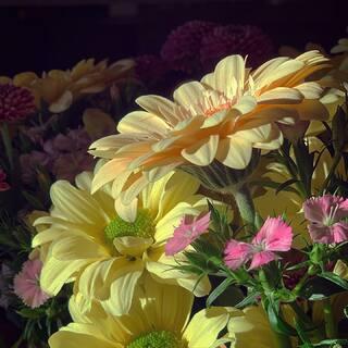 Ich wünsche Euch schöne Pfingsten!  Genießt das wechselhafte Frühlingswetter. 😜  #momentofnature  #flowers